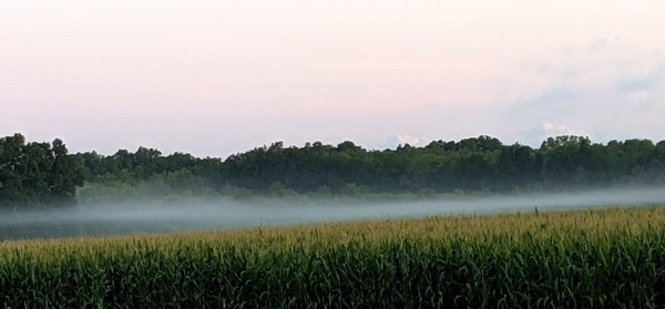 Fog over a marsh near Seneca lake.