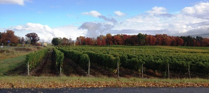 Glenora Wine Cellars - Nearby Vineyards in Fall