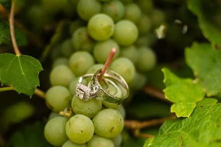 Two wedding rings, hanging on a cluster of Niagara grapes in the vineyard.